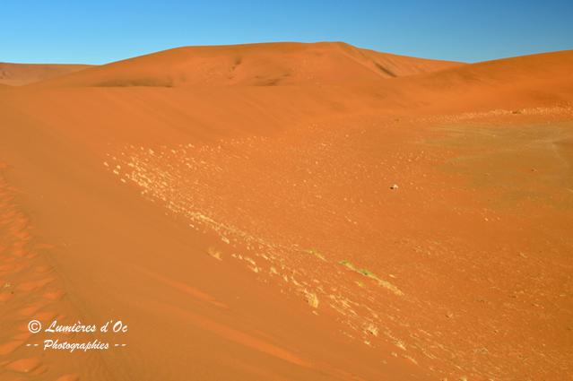 Antilope Désert Namib