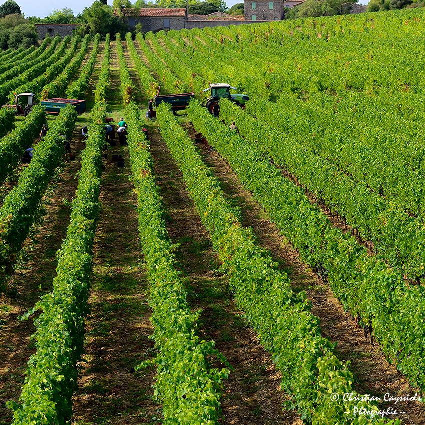 Domaine La Salade Saint Henri les vendanges