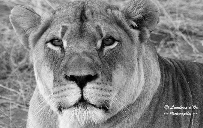 Lionne Namibie