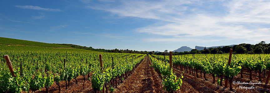 Vignes & Pic Saint Loup