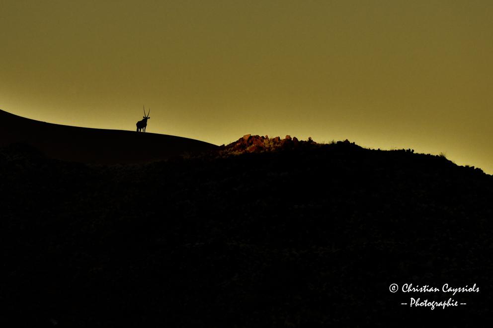 Oryx au coucher de soleil
