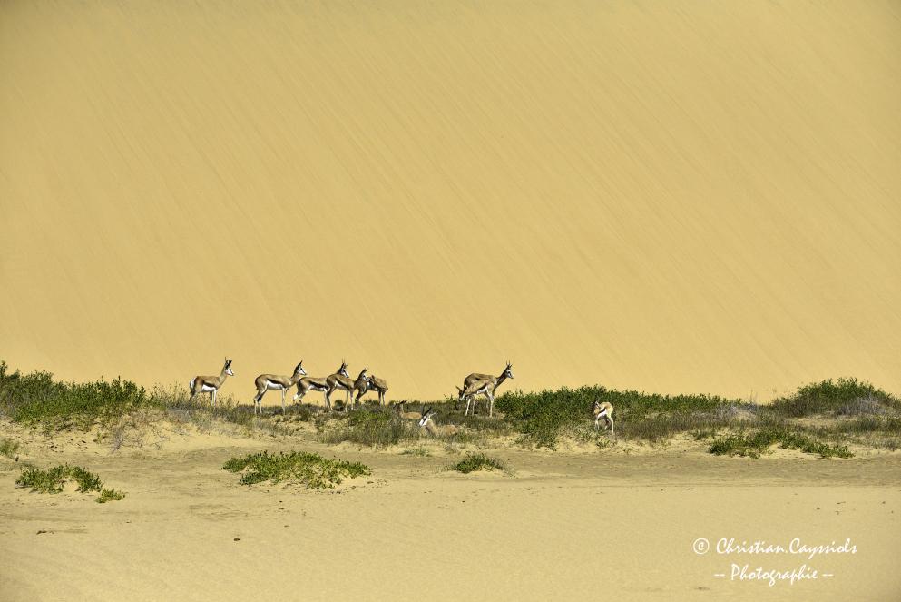 Dune du Namib vers l'océan