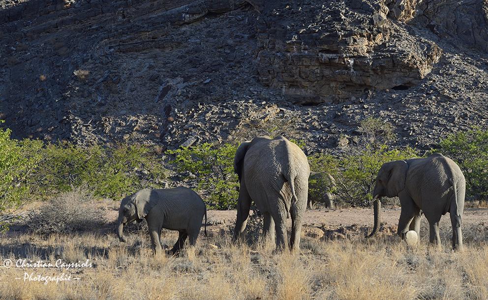 Eléphants à la recherche d'eau