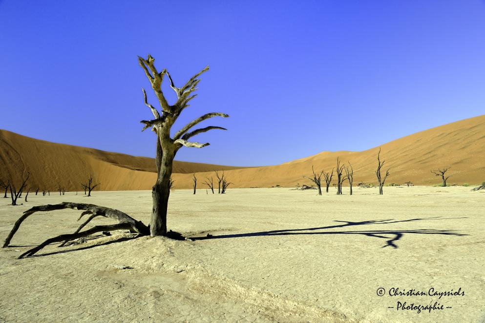 La dune 9 et les arbres morts de Dead Vlei.