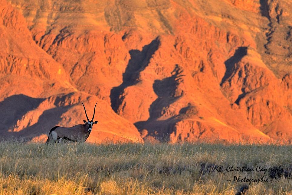 Oryx au crépuscule